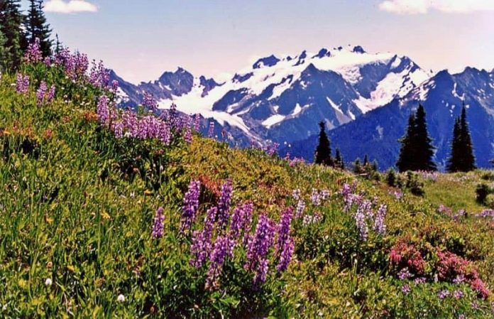 Mount Olympus Olympic National Park USA America