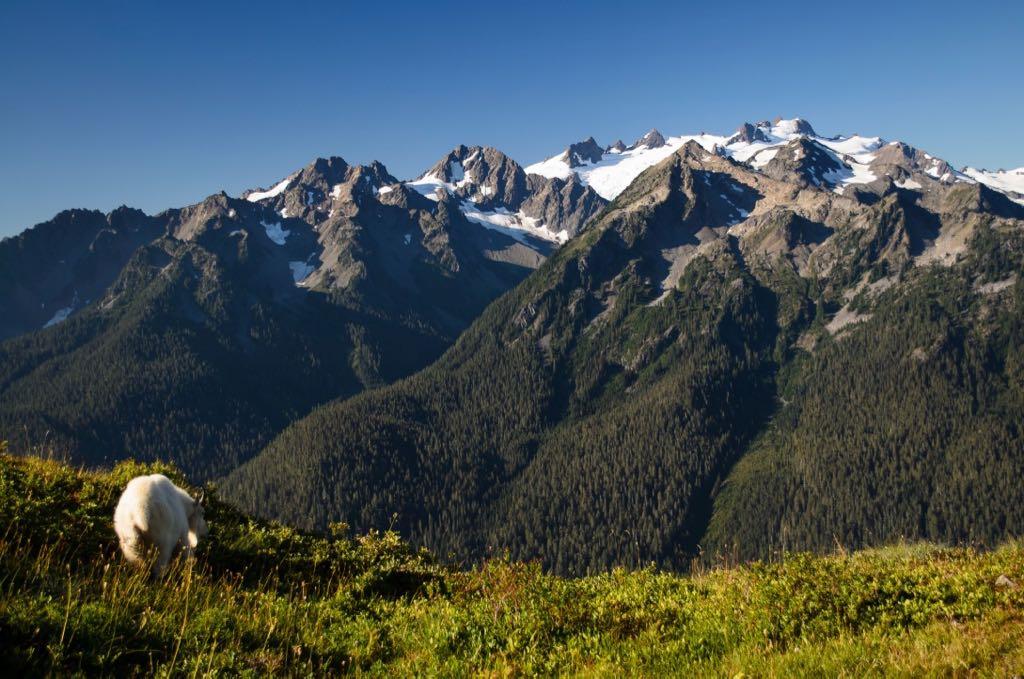 Mount Olympus in Washington
