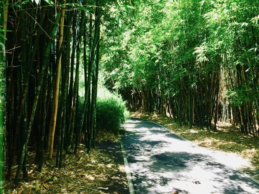 Adelaide Botanic Gardens Bamboo Grove