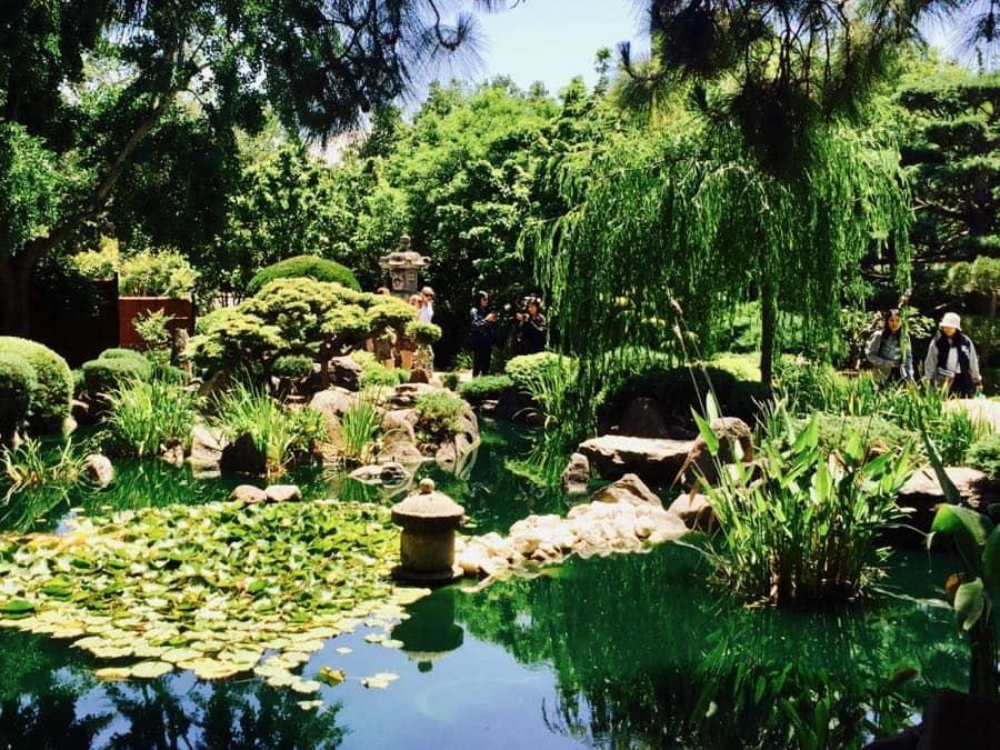 Beautiful Japanese Garden in Adelaide