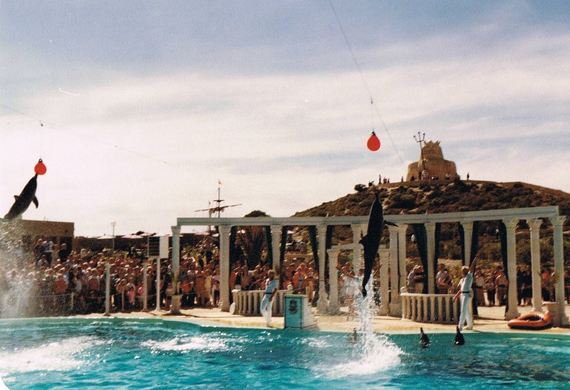Atlantis Dolphin Show