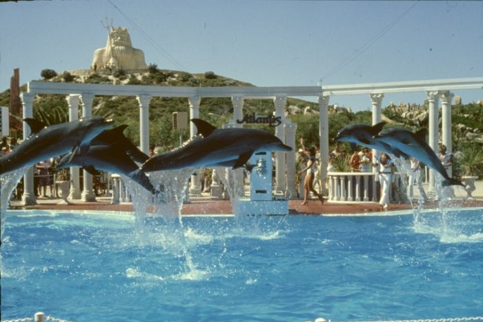 Dolphins at Atlantis Marine Park 80s Two Rocks Western Australia