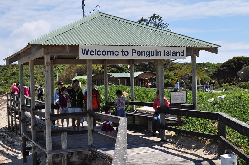 Things to do in Perth Penguin Island