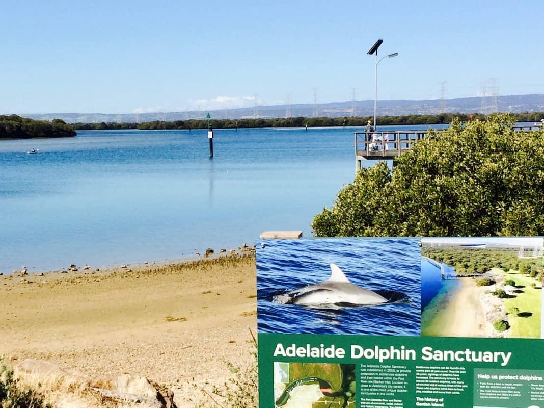 Adelaide Dolphin Sanctuary