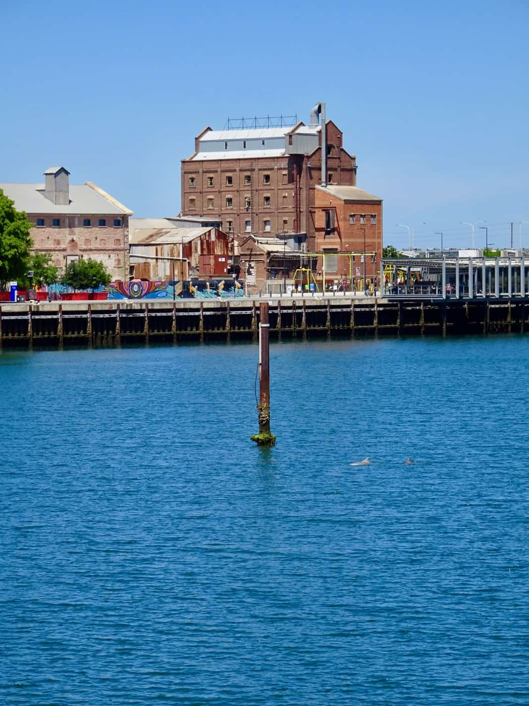 Port Adelaide Attractions Dolphins