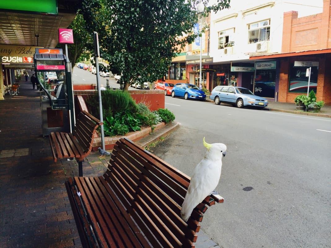 Katoomba Main Street
