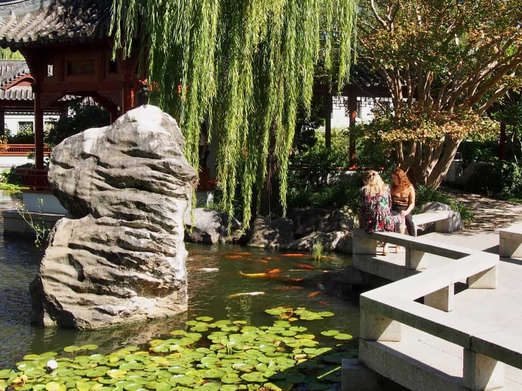 Lotus Pond Fish